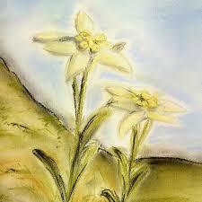 Edelweiss 45